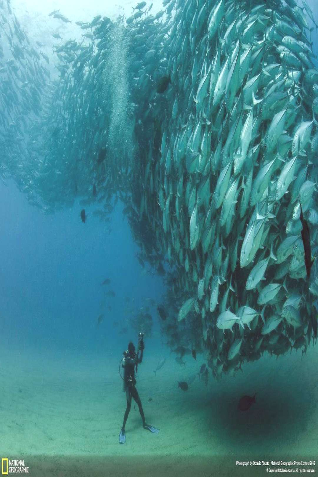 An incredible capture of a large group of Bigeye trevally fish at Cabo Pulmo Nat... - An incredibl