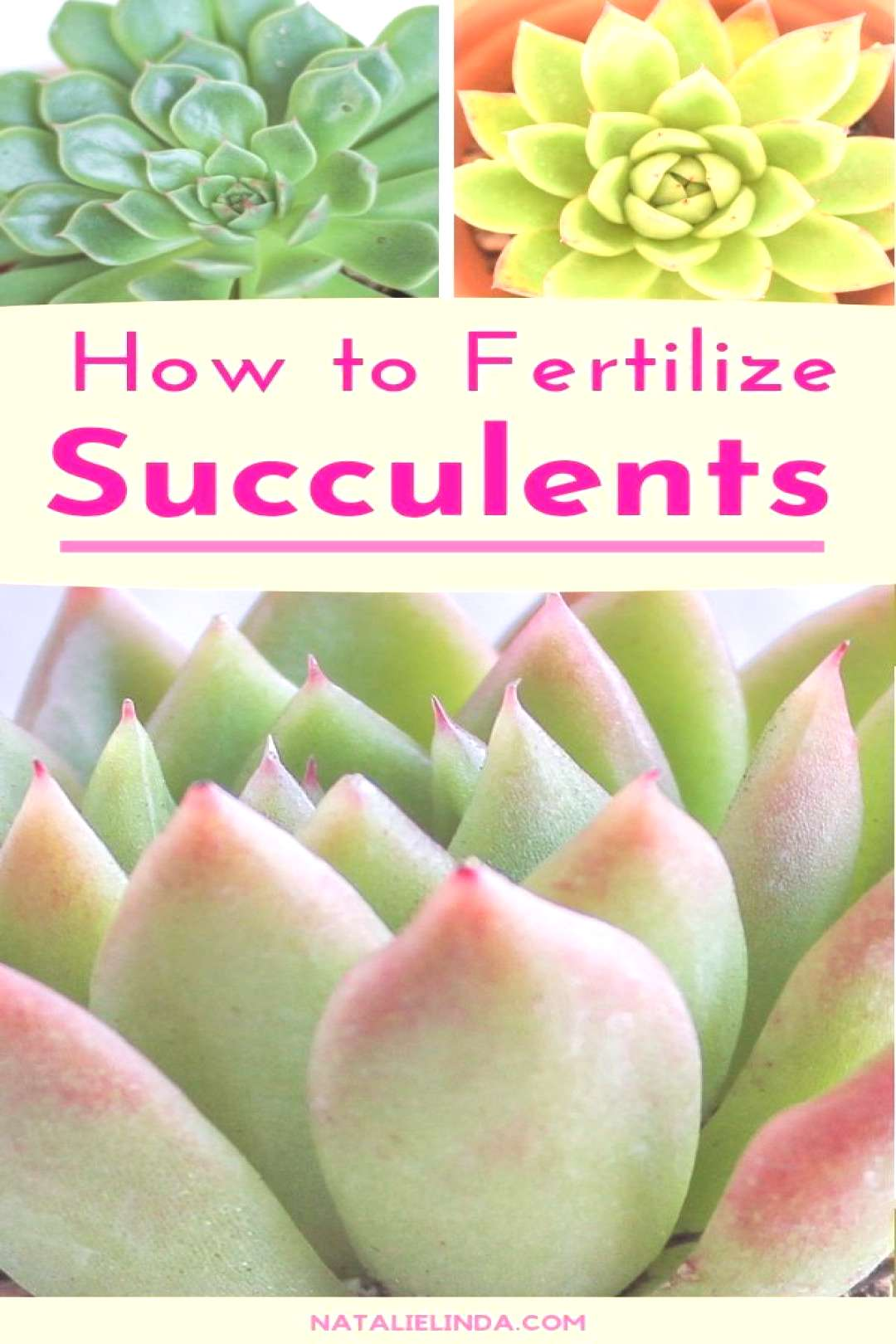 Fertilizing Succulents Doing it the Right Way for Optimum Results Learn how to best fertilize your