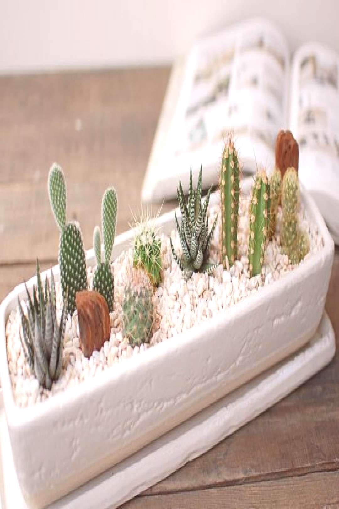 These Popular Cactus Arrangements are the Latest Trend for Adding Green to a Home cactus and succul